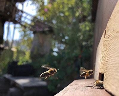 Neuer Frankfurter Garten, Bienen Baum Gut e.V. - Foto: Ruth Perk, klein