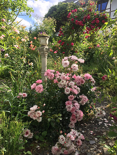 Rosengarten Langer, Route der Welterbe-Gärten, UNESCO-Welterbe Oberes Mittelrheintal - Foto: Beate Lieber