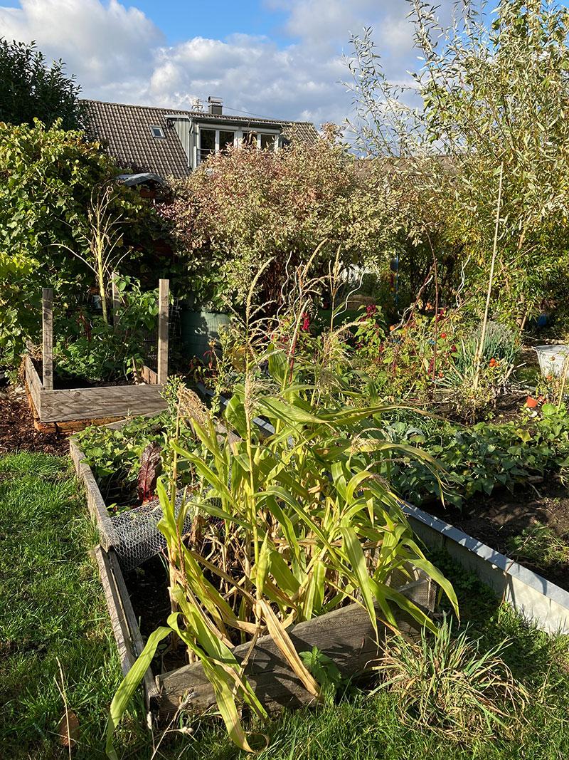 Wilder Familiengarten einer Gartenbloggerin, © Ursula Schörverth